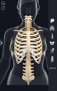 My Skeleton Anatomy screenshot 4