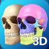 Icona My Skull Anatomy