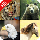 170 Animal Sounds APK Android
