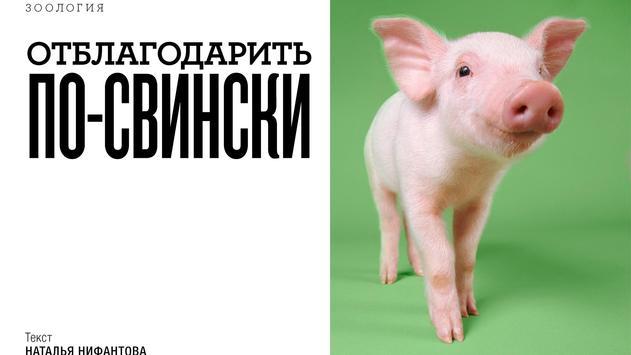 """Журнал """"Вокруг Света"""" screenshot 4"""