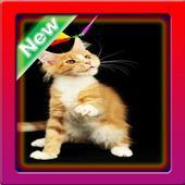 Cute Cats Wallpaper icon