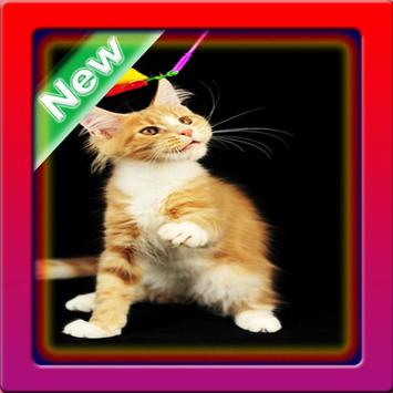 Cute Cats Wallpaper screenshot 5