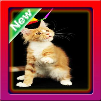 Cute Cats Wallpaper poster