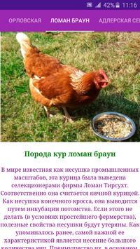 Breeds of chickens - Incubator screenshot 4