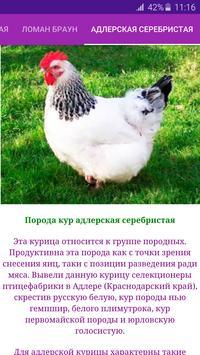 Breeds of chickens - Incubator screenshot 3