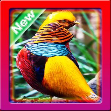 Wallpaper Birds screenshot 8