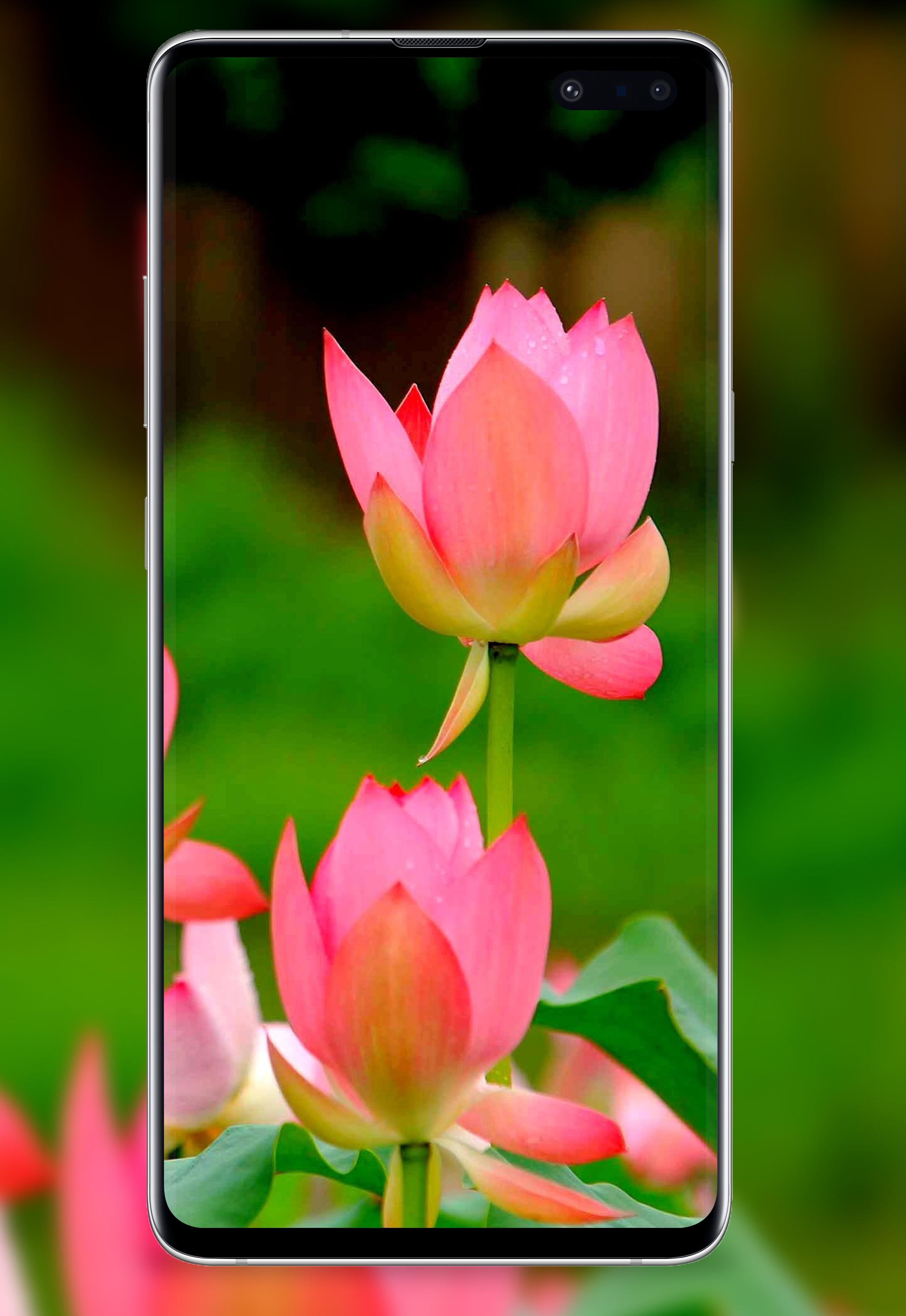 4k Flower Wallpapers Rose Hd Wallpaper Wallz For Android Apk Download