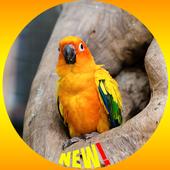 Conure Bird Wallpaper HD icon
