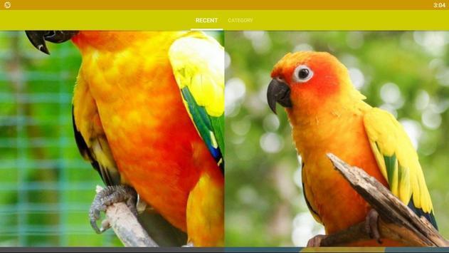 Conure Bird Wallpaper HD screenshot 4