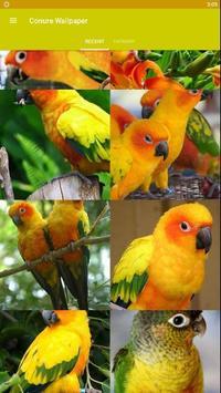 Conure Bird Wallpaper HD poster