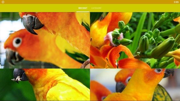 Conure Bird Wallpaper HD screenshot 3