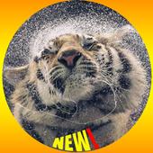 4K Wallpaper HD icon