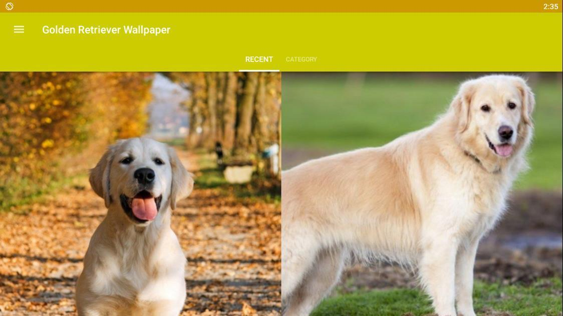 Golden Retriever Dog Wallpaper Hd For Android Apk Download