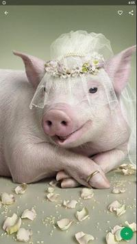 Pig Wallpaper screenshot 1