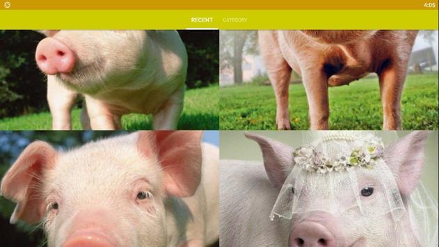 Pig Wallpaper screenshot 4