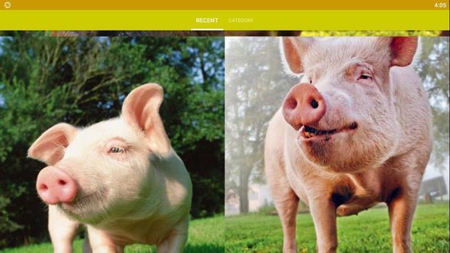 Pig Wallpaper screenshot 5