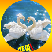 Swan Wallpaper icon