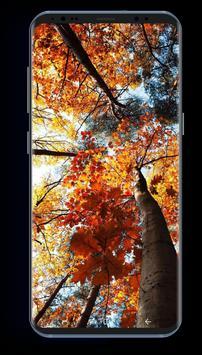 Autumn Season HD Wallpapers screenshot 2