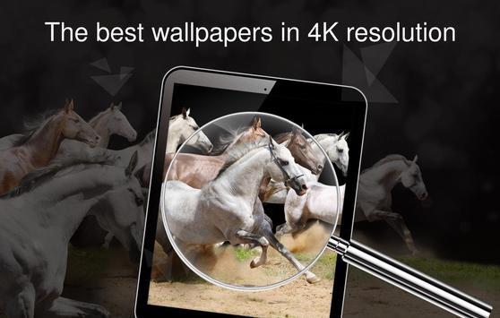Horses wallpapers 4k screenshot 14