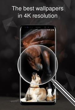 Horses wallpapers 4k screenshot 2