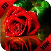 HD Wallpapers - Rose Edition icon