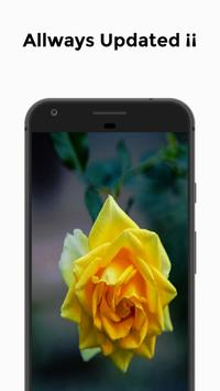 HD Wallpapers - Rose Edition screenshot 3