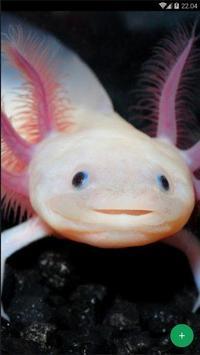 Axolotl Wallpapers screenshot 2