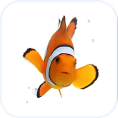 Clown Fish Animated Keyboard + Live Wallpaper icon