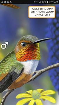 iBird Pro Birds North America syot layar 1