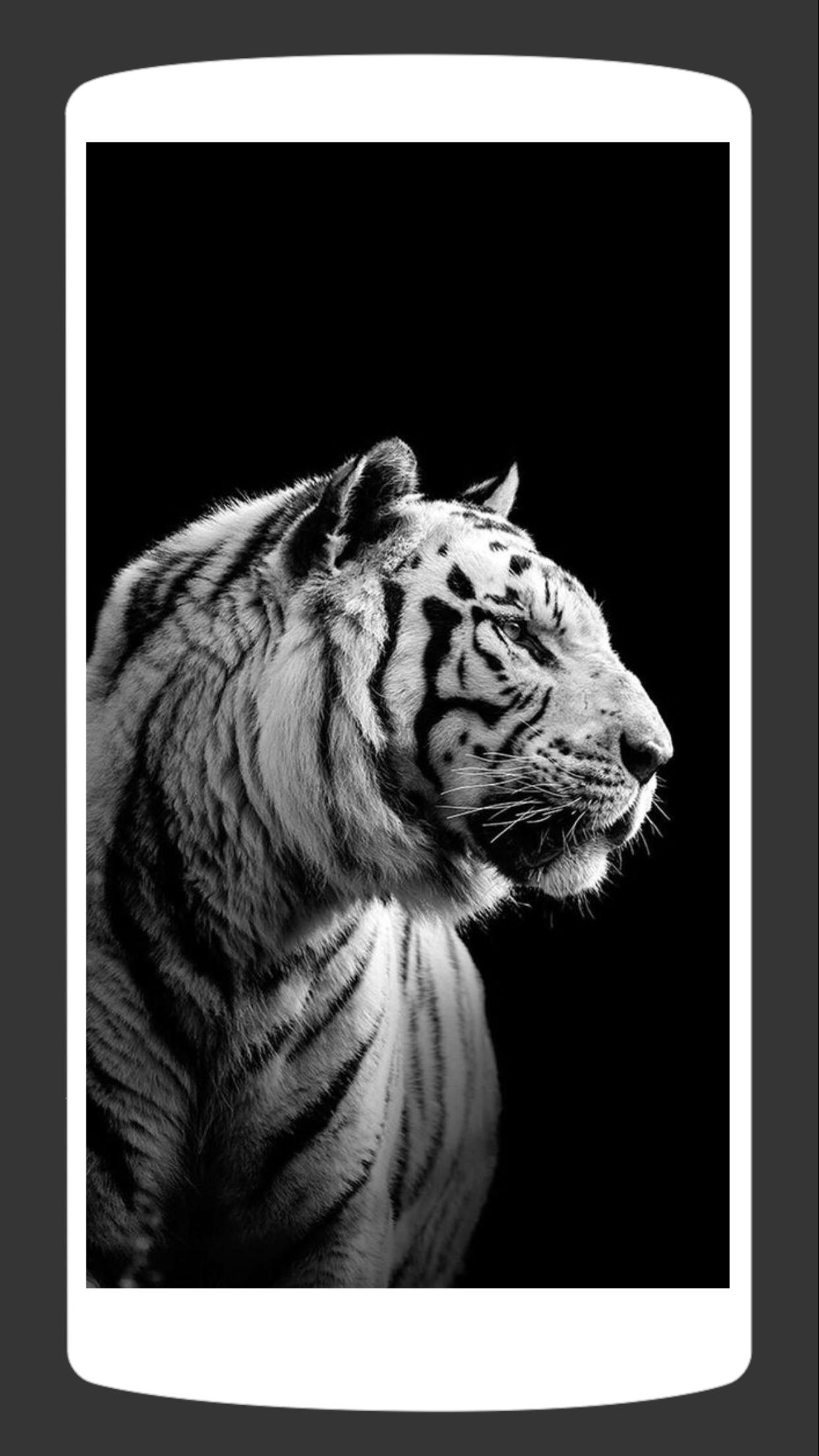 White Tiger Wallpaper Hd 4k For Android Apk Download