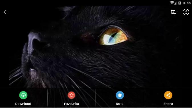Cute Cat Eyes Wallpaper For Android Apk Download