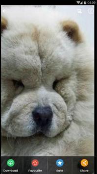 Chow Chow Puppies Wallpaper screenshot 6