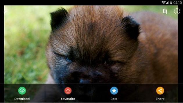 Chow Chow Puppies Wallpaper screenshot 9