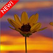 Sunset Flower Wallpaper icon
