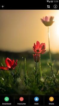Sunset Flower Wallpaper screenshot 3