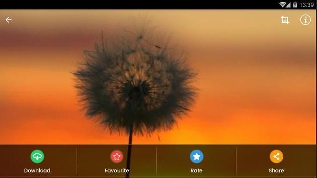 Sunset Flower Wallpaper screenshot 10