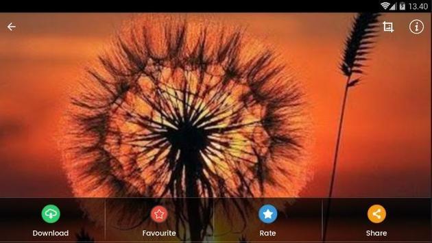 Sunset Flower Wallpaper screenshot 11