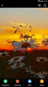 Sunset Flower Wallpaper screenshot 2
