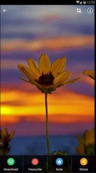 Sunset Flower Wallpaper screenshot 7