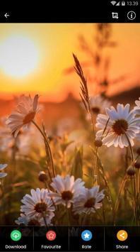 Sunset Flower Wallpaper screenshot 4