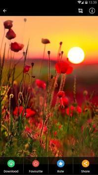 Sunset Flower Wallpaper screenshot 5