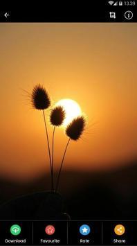 Sunset Flower Wallpaper screenshot 6