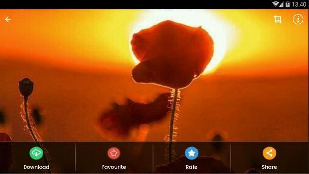 Sunset Flower Wallpaper screenshot 9