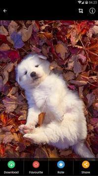 Samoyed Puppies Wallpaper screenshot 4