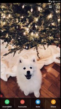 Samoyed Puppies Wallpaper screenshot 5