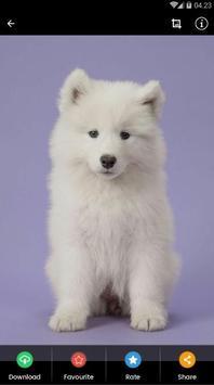 Samoyed Puppies Wallpaper screenshot 6
