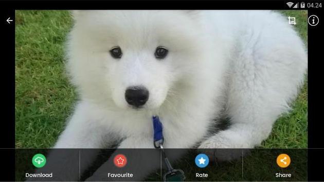 Samoyed Puppies Wallpaper screenshot 8