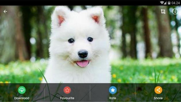 Samoyed Puppies Wallpaper screenshot 9