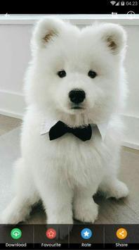 Samoyed Puppies Wallpaper screenshot 2