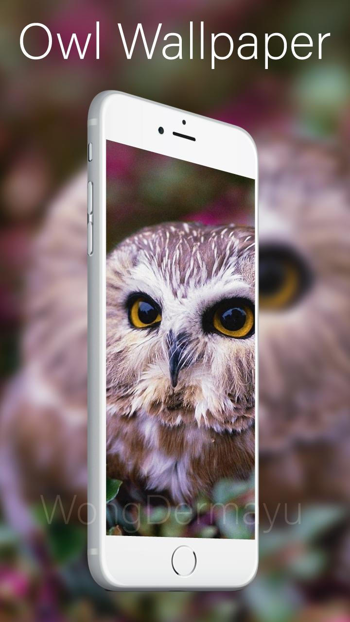 Owl Wallpaper Art Free For Android Apk Download